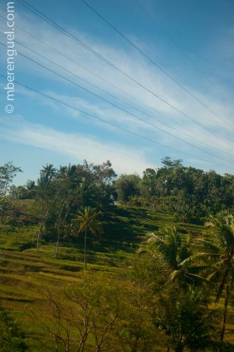 Java's Landscape