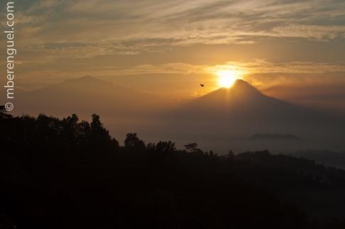 Sunrise (also for the Bird)