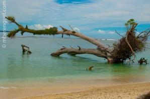 Dead Tree in the Beach
