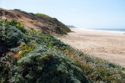 Plants in the beach